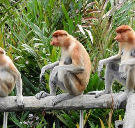 Top 5 Things To Do In Malaysian Borneo